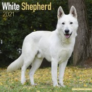 Tuinland Kalender 2021 German Shepherd White
