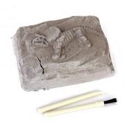 3D Dinosaur Model Skeleton Excavation kit Archaeology Children Kids Toy - Multicolor (Imported)