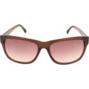 Lacoste Wayfarer Sunglasses(Brown)