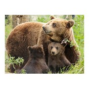 Sim,29.5 X 19.6 inch Jigsaw Puzzle Games We Played 1000 Piece Made of Premium Basswood DIY Present in Box Present Wrap Room Mural : Bears Family Mother