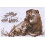 The Lion Paradise