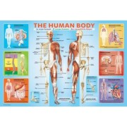 Puzzle 200 piese The Human Body