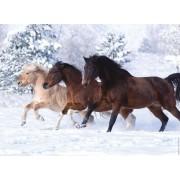 Пазл - «Галопом по снегу» 500 шт