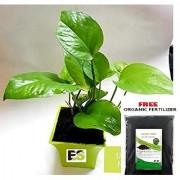 Es Money Plant Green Pot With Freebie