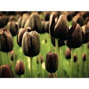 Tablou lalele negre 80x60 cm - Frumusete robusta