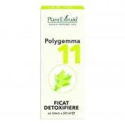 Polygemma nr.11 Ficat detoxifiere