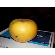 Măr Poinic