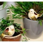Umidificatoare plante - 2 pasarele