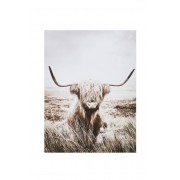 Jotex NATURE HIGHLAND CATTLE poster 30x40 cm