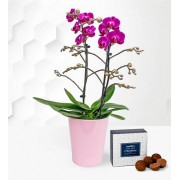 Phalaenopsis Orchids – Birthday Gifts – Orchid Plant Delivery – Birthday Gift Delivery