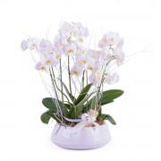 Centro de plantas de Phalaenopsis blancas - Flores a Domicilio