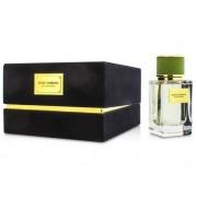 Dolce & gabbana velvet bergamot 50 ml eau de parfum edp profumo donna