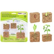 Safariology Life Cycle of a Green Bean Plant B62 Comes with Educational Information in Three Languages on Each Stage of Development For Ages 4+