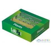 Levenhuk Labzz P12 Növények - Előkészített Tárgylemez-Készlet (Levenhuk , 72869)