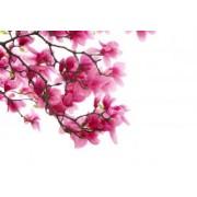 Tapet autocolant -Flori de primavara 1 - 150X218cm