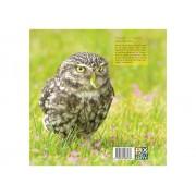 Birdpix Praktijkboek Natuurfotografie voor uilskuikens