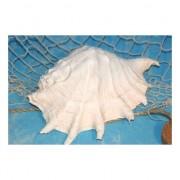 Geen Decoratieve witte schelp 20 cm