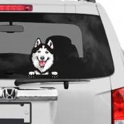 Szibériai Husky rajzos autómatrica