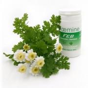 Oemine FEB (Extract musetel) - 60 capsule