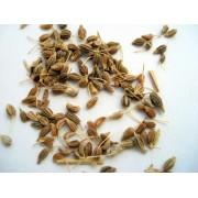 AWA herbs Aníz plod 50g