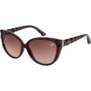 SWAROVSKI Cat-eye Sunglasses(Brown)