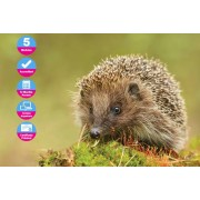International Open Academy £10 (from International Open Academy) for an accredited wildlife rescue and rehabilitation course