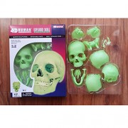 Ocamo 3D Puzzle Didactic Explored Skull 1:2 Anatomy Model Detachable Human Skull for Teaching Fluorescent Bone 26089