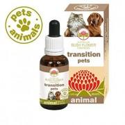 Bush Biotherapies Pty Ltd Transition Pets 30ml