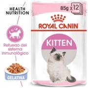 Royal Canin Kitten en gelatina - 24 x 85 g - Pack Ahorro