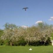 kentrop Hawk Kite 7 meter set met paal en grondanker