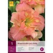Hemerocallis Lacy Doily