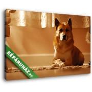 Kutya az ablaknál (35x25 cm, Vászonkép )