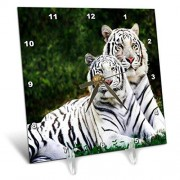 3dRose LLC 3dRose DC_54187_1 White Tigers-Desk Clock, 6 by 6-Inch