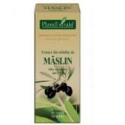 Extract din mladite de maslin - olea europaea mg=d1 50ml PLANTEXTRAKT