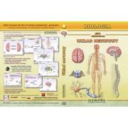 Układ nerwowy - program multimedialny