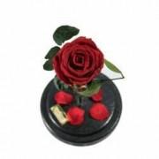 Trandafir Criogenat Rosu Queen Roses in cupola de sticla