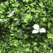 GREENWALL WHITE