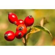 AWA herbs Šípek plod drcený 100g