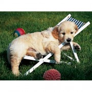 Ravensburger puzzle golden retriever, 500 piese