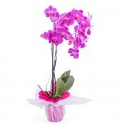Interflora Planta de Orquídea Interflora