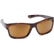 Titan Wayfarer Sunglasses
