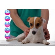 International Open Academy £12 (from International Open Academy) for an accredited animal care course