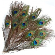 10 Pcs Peacock Eye Tail Feathers For pooja / mayur panka for pooja