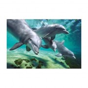 Geen Poster dolfijnen 61 x 92 cm - Action products