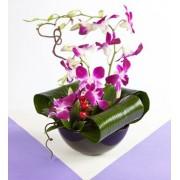 Orhidee delicate
