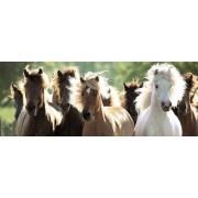 Пазл - панорамный «Дикие лошади» 1000 шт