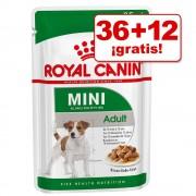 Royal Canin 40/48 sobres en oferta: hasta 12 sobres ¡gratis! - Maxi Adult (40 x 140 g)