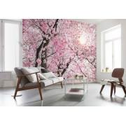 Fototapet flori de cires Splendoare
