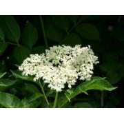 AWA herbs Černý bez květ 100g