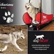 Futópad dogPacer 80 kg-os testsúlyig